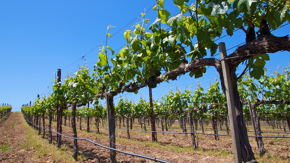 Best Napa Wine Tour Packages