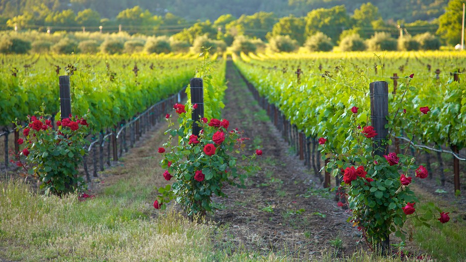 Napa Valley Travel Packages