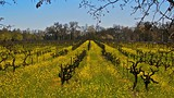 Sonoma Valley - Sonoma County Tourism