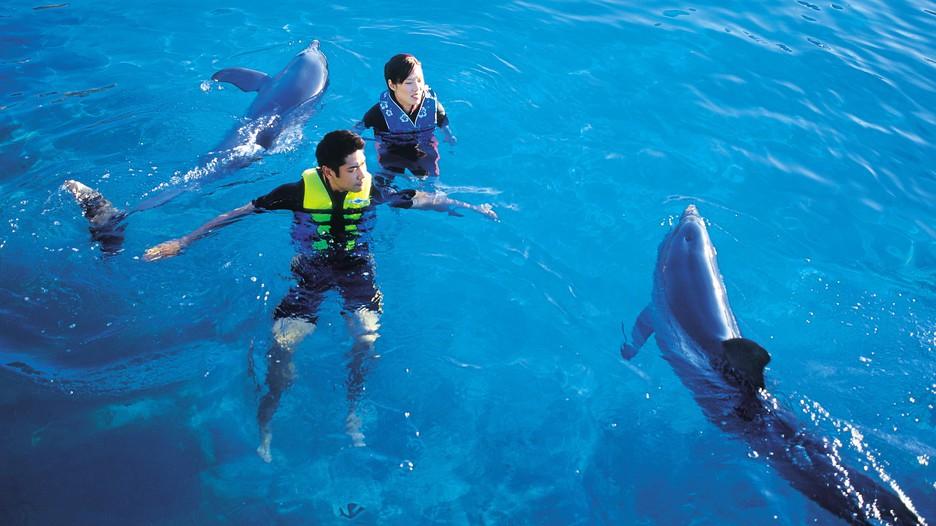 Gold coast travel guide visit gold coast australia expedia com au