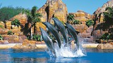 Showing item 17 of 64. Sea World - Gold Coast - Tourism and Events Queensland