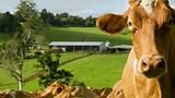 Maleny - Sunshine Coast - Tourism and Events Queensland