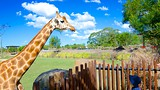 Australia Zoo - Sunshine Coast - Tourism Media