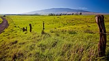 Waimea (Kamuela) - Hawaii - Hawaii Visitors and Convention Bureau