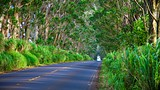 Tunnel of Trees - Hawaii Visitors and Convention Bureau