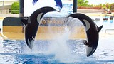 Loro Parque - Puerto de la Cruz - Tourism Media