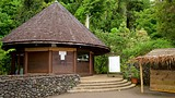 Showing item 48 of 88. The Water Gardens of Vaipahi - Tahiti - Tourism Media