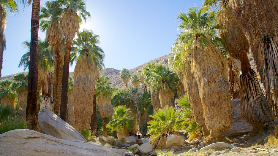Indian Canyon in Palm Springs – Palm Springs Tourist Attractions Map