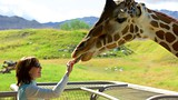 Living Desert Zoo and Gardens - Palm Springs - Tourism Media