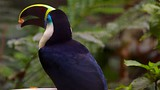 Bird Park - Iguazu - Tourism Media