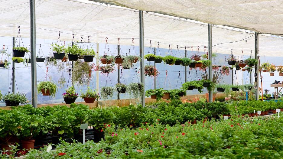 Lavender garden park in gramado expedia for Cantigny le jardin