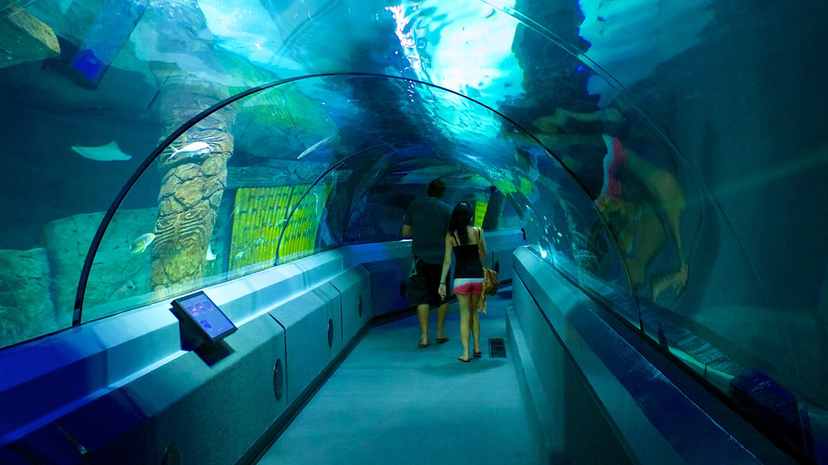 Underwater World Sea Life - Mooloolaba, Queensland Attraction ...