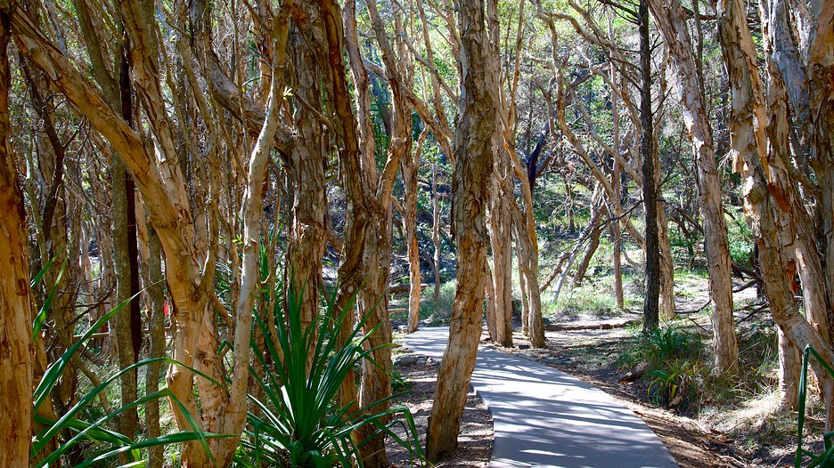 1 Helm Court Noosaville Qld 4566 besides Leah Linden S Garden Wedding Sunshine Coast Photography also Noosa National Park Noosa Heads d6086881 furthermore  in addition Dominicakaylee. on lake weyba