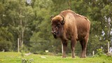 Highland Wildlife Park - Kingussie - Tourism Media