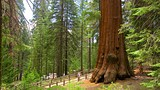 General Grant Tree Trail - Sequoia and Kings Canyon National Parks - Tourism Media