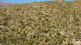 Saguaro National Park - Arizona - Tourism Media
