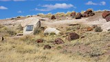 Petrified Forest National Park - Arizona - Tourism Media