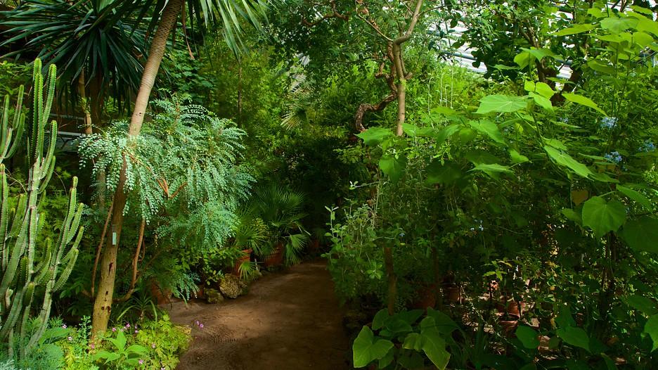 St Petersburg Botanical Garden St Petersburg Attraction