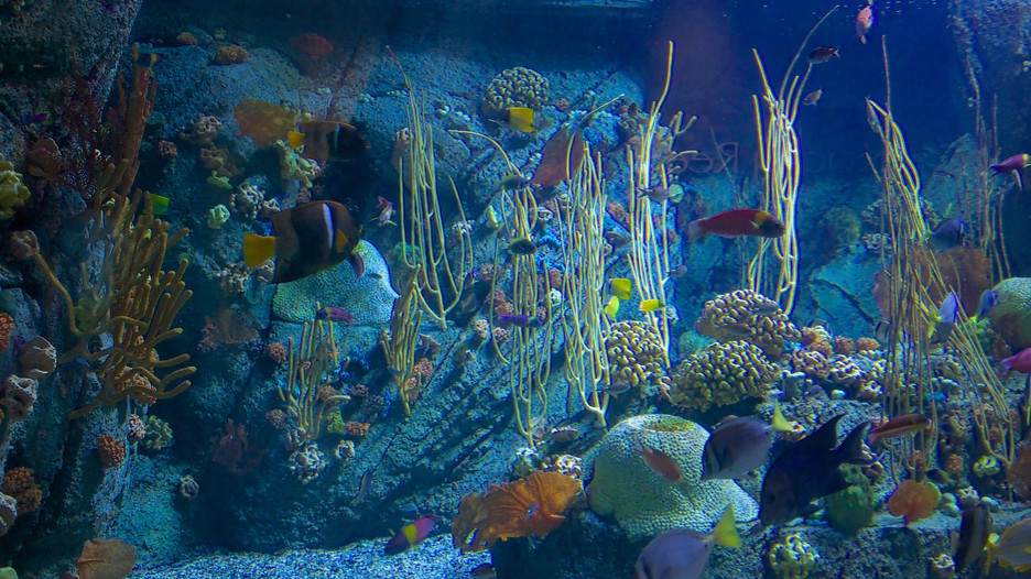 Aquarium Of The Pacific In Long Beach California