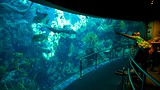 Aquarium of the Pacific - Los Angeles - Tourism Media