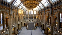 London Natural History Museum - London (med närområde)