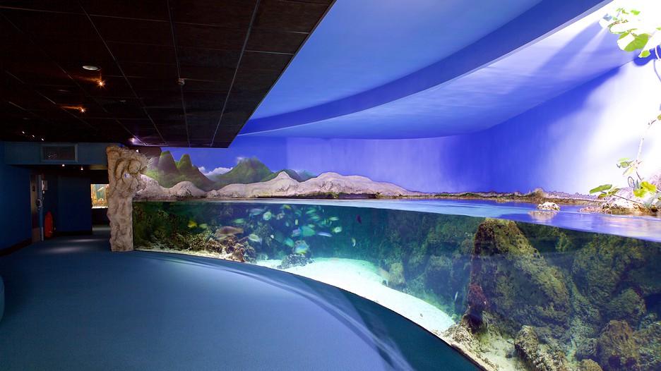 Aquarium La Rochelle La Rochelle Nouvelle Aquitaine