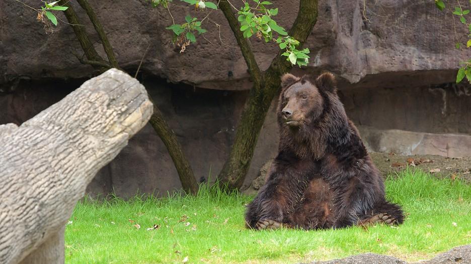 Parque Zoologico de Chapultepec in Mexico City, | Expedia.ca