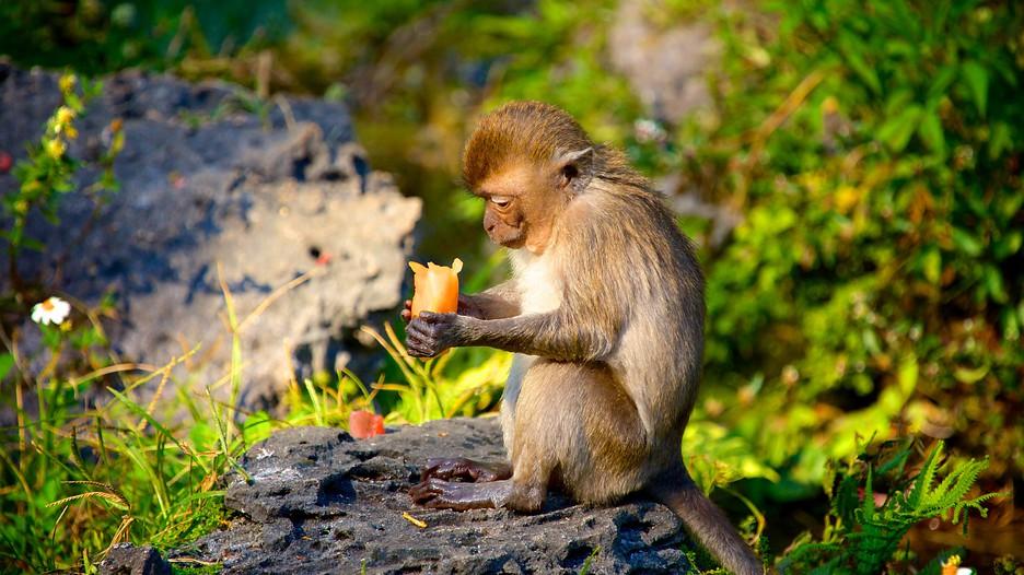 Monkey Jungle Miami