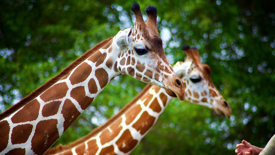 Zoo Miami In Miami Florida Expedia