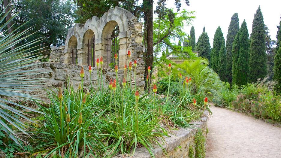 Jardin des plantes de montpellier in montpellier for Jardine des plantes