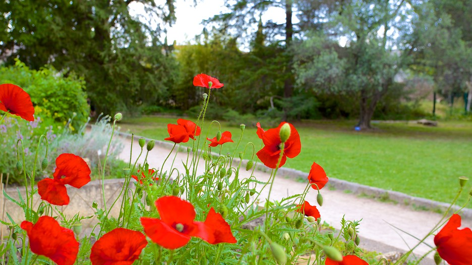 Jardin des plantes de montpellier d couvrez montpellier avec - Jardin d essence montpellier ...