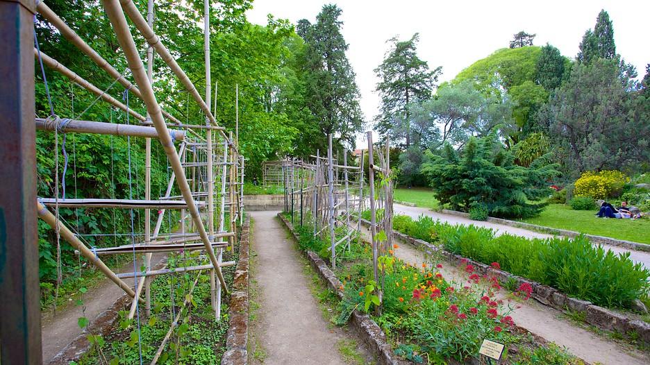 Jardin des plantes de montpellier informaci n de jardin des plantes de montpellier en - Jardin d essence montpellier ...