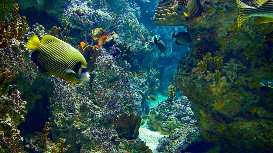 Mare Nostrum Aquarium - Montpellier - Tourism Media