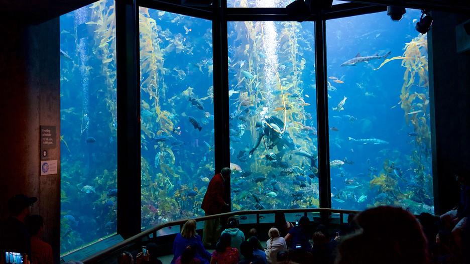 Monterey Bay Aquarium In Monterey California