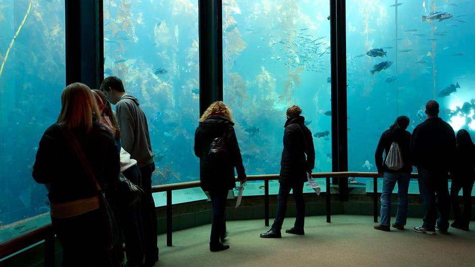Monterey bay aquarium hotel package deals