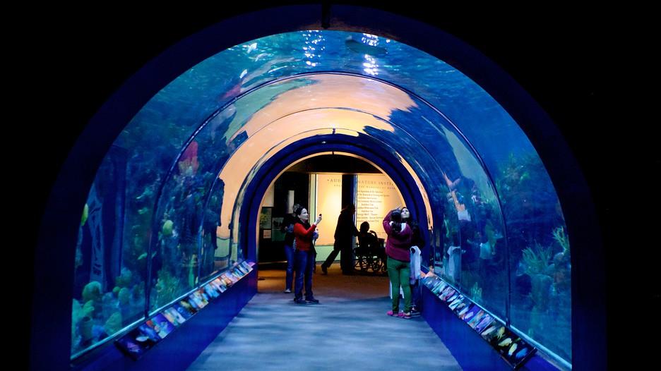 Audubon Aquarium Of The Americas In New Orleans Louisiana