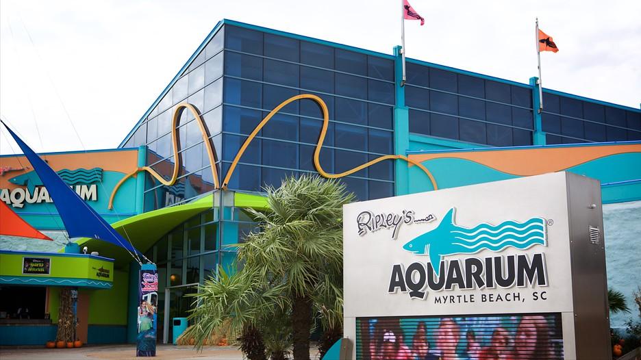 Ripley's Aquarium in Myrtle Beach, South Carolina | Expedia