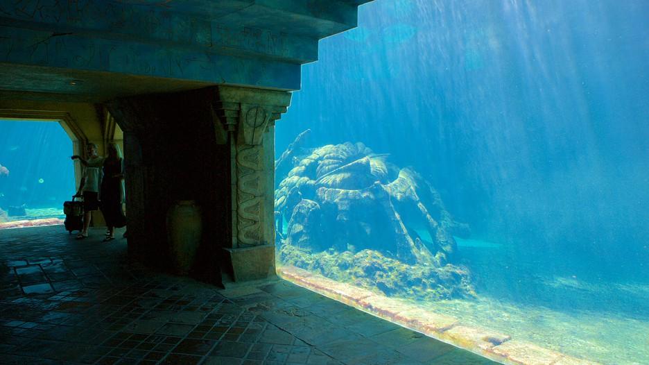 Atlantis Aquarium Em Nassau Bahamas