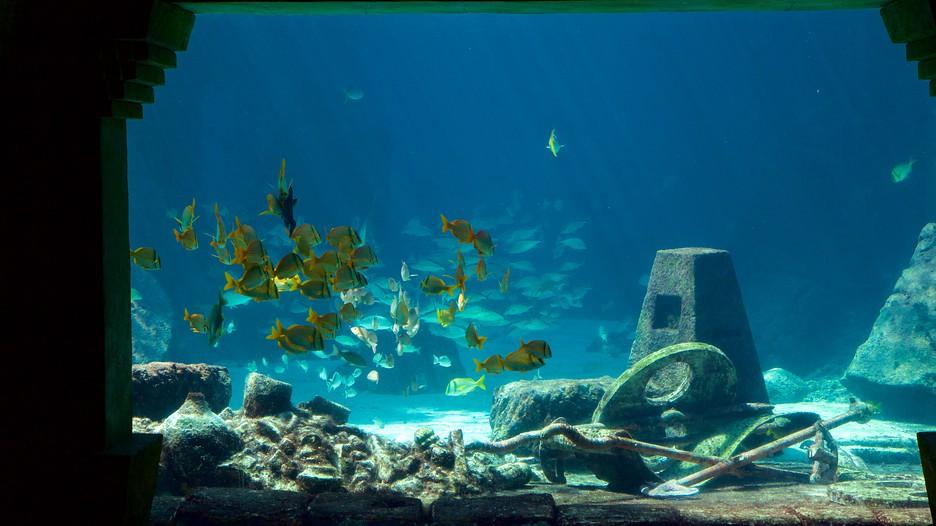 Atlantis Aquarium Punti Di Interesse A Nassau Con