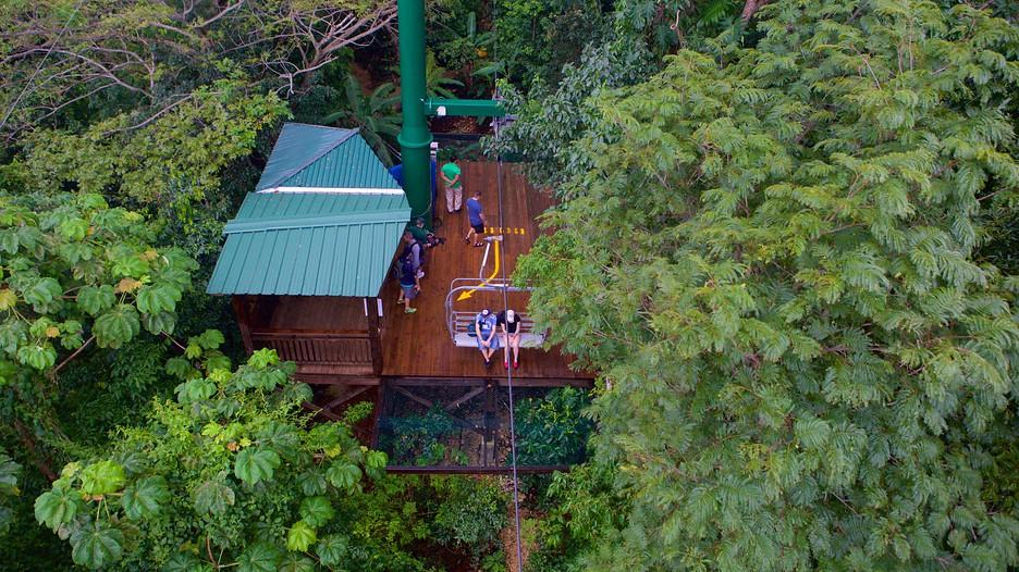 Mystic Mountain Montego Bay Attraction Expedia Com Au