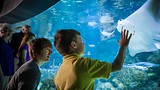 Henry Doorly Zoo - Omaha - Nebraska Tourism