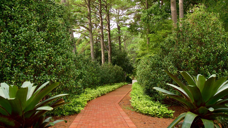 Norfolk Botanical Garden In Norfolk Virginia Beach