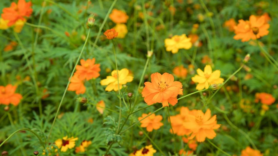 Norfolk Botanical Garden Informaci N De Norfolk Botanical Garden En Norfolk Estados Unidos