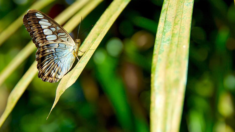 Spice Farm Penang Butterfly Farm Penang