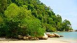 Showing item 11 of 22. Penang National Park - Penang - Tourism Media
