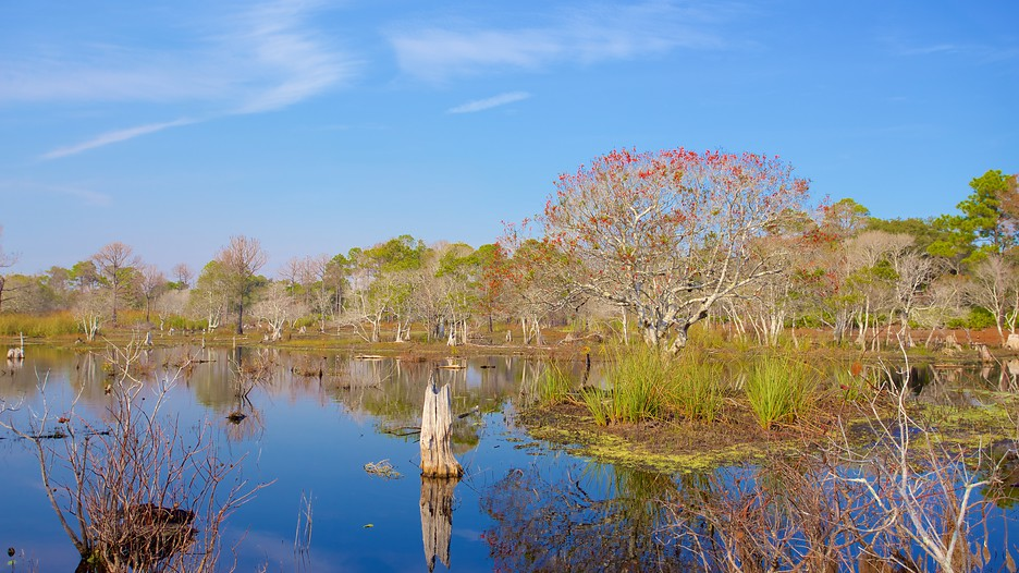 St Andrews State Park In Panama City Florida Expedia Ca