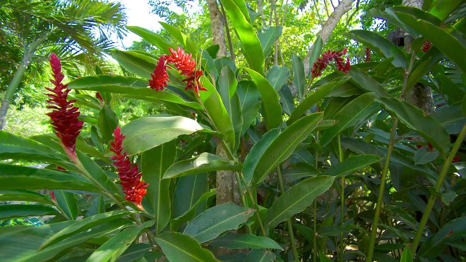 Botanical gardens of acapulco acapulco for Botanic com jardin