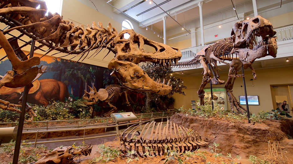 Where Is Carnegie Museum Of Natural History