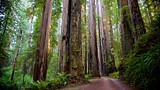 Cal-Barrel Scenic Road - Eureka - Tourism Media