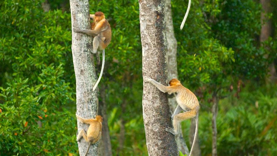Orangutang - The Rewards Of Cruelty